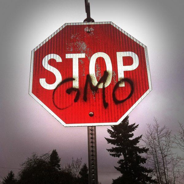 GMO - żywność modyfikowana genetycznie