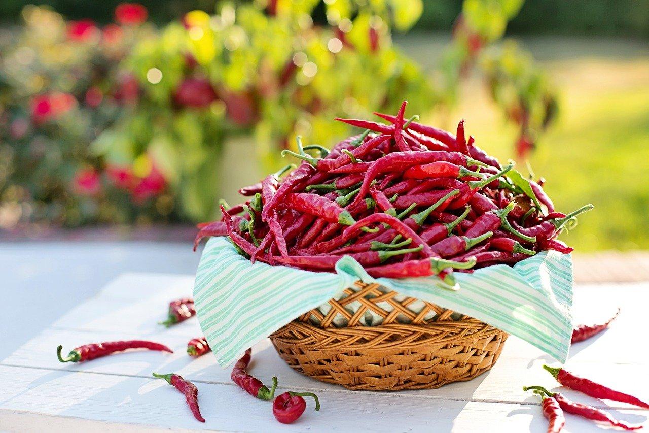 Papryczka chili - przyprawy