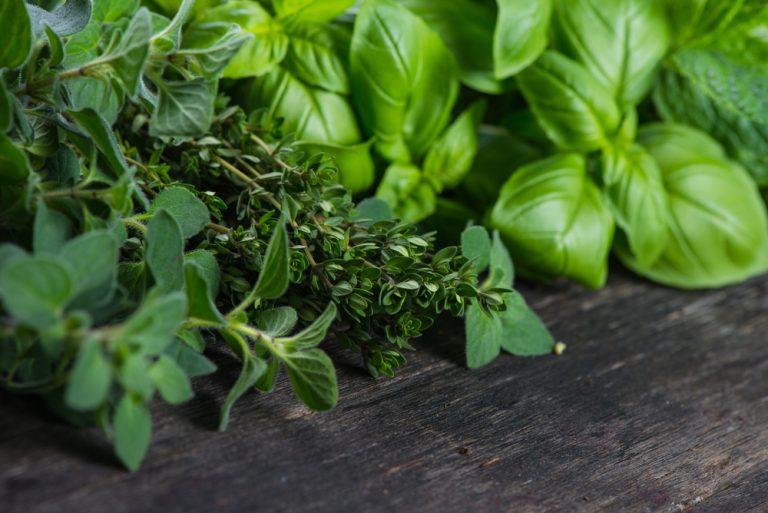 zioła w schorzeniach przewodu pokarmowego